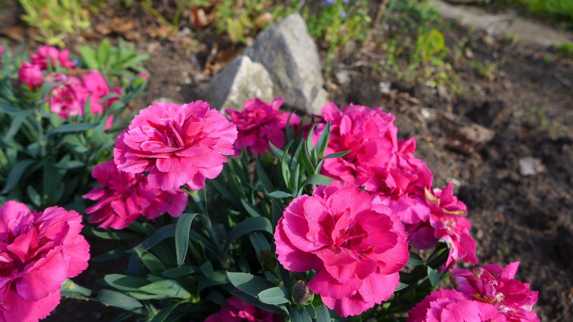01_Blühender Frühling