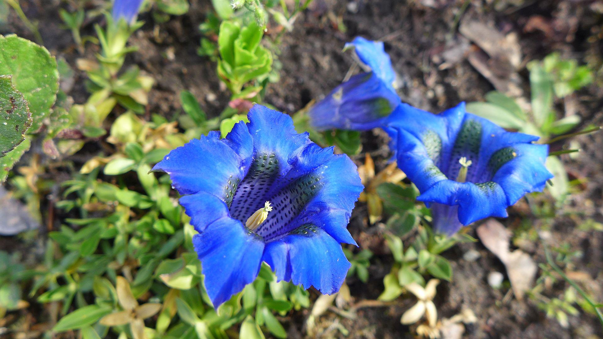 03_Blühender Frühling