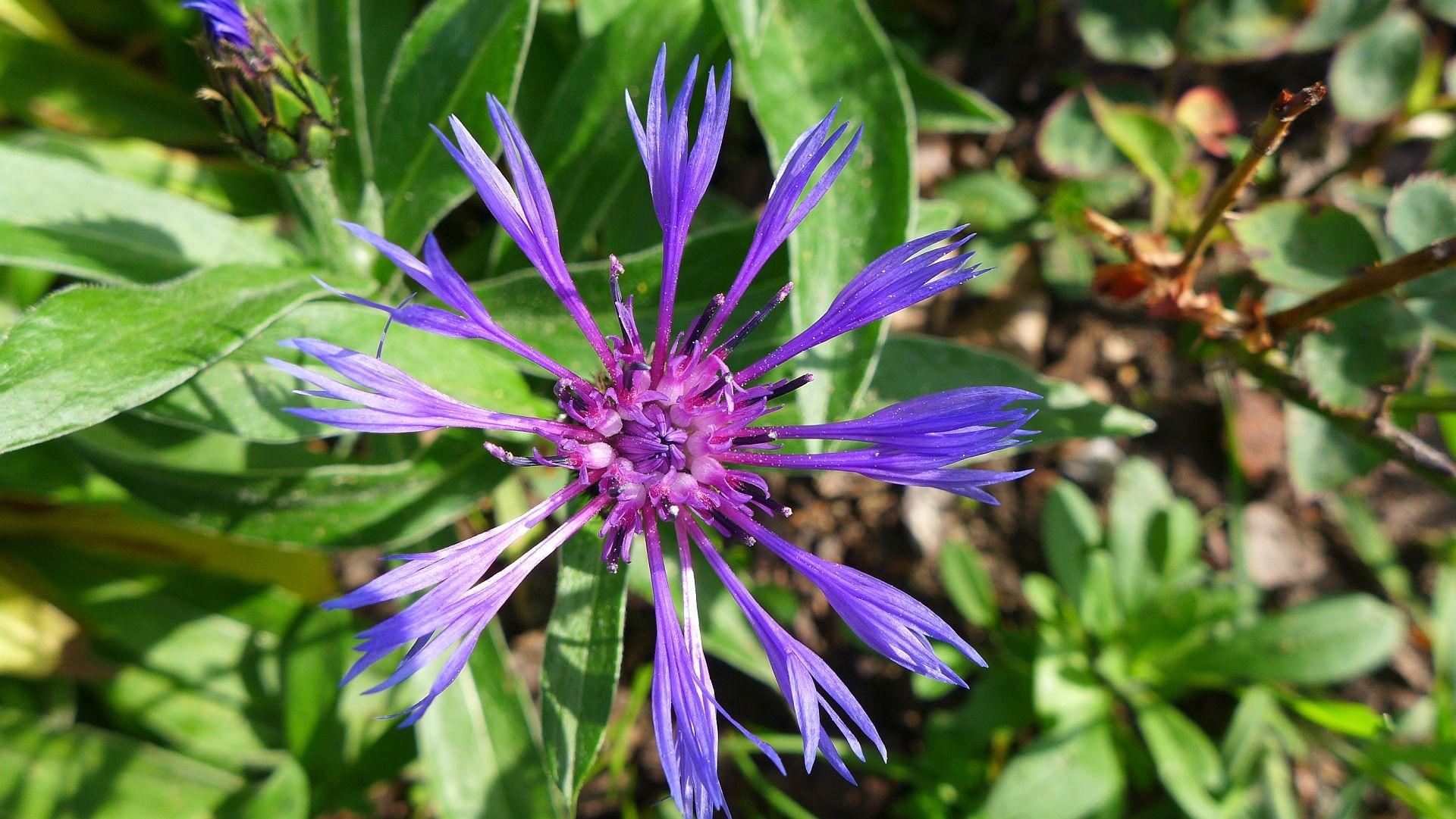 04_Blühender Frühling