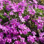 05_Blühender Frühling