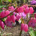 06_Blühender Frühling
