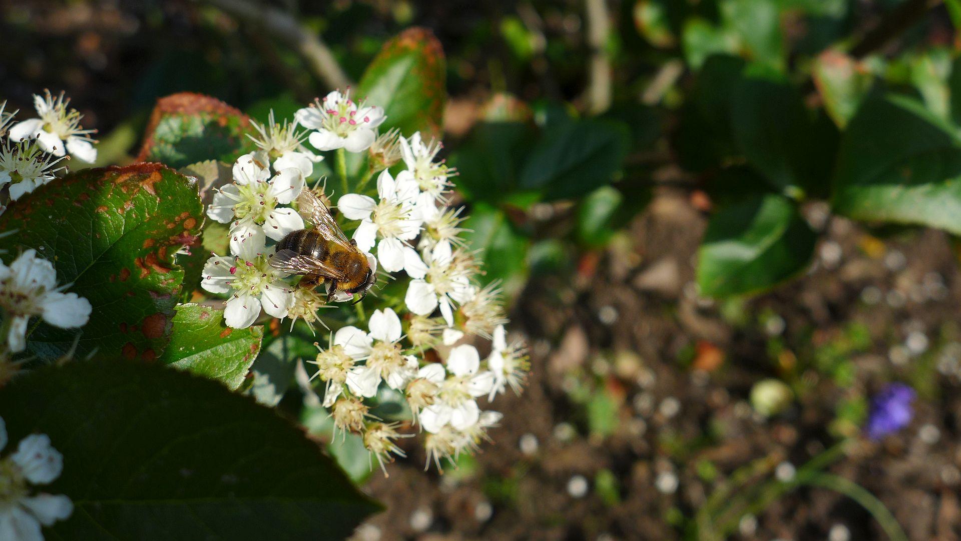 07_Blühender Frühling