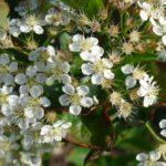 08_Blühender Frühling