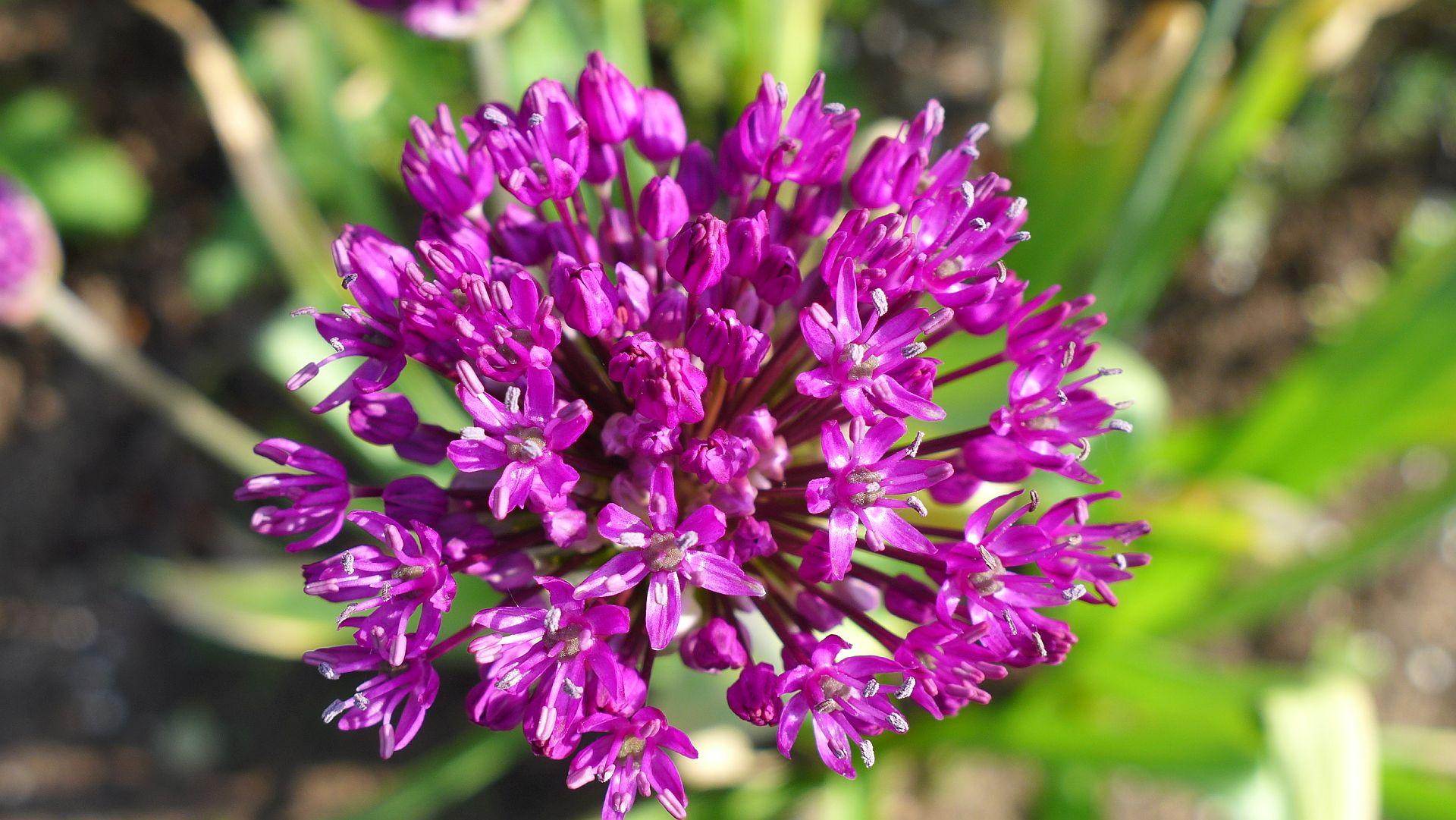 09_Blühender Frühling