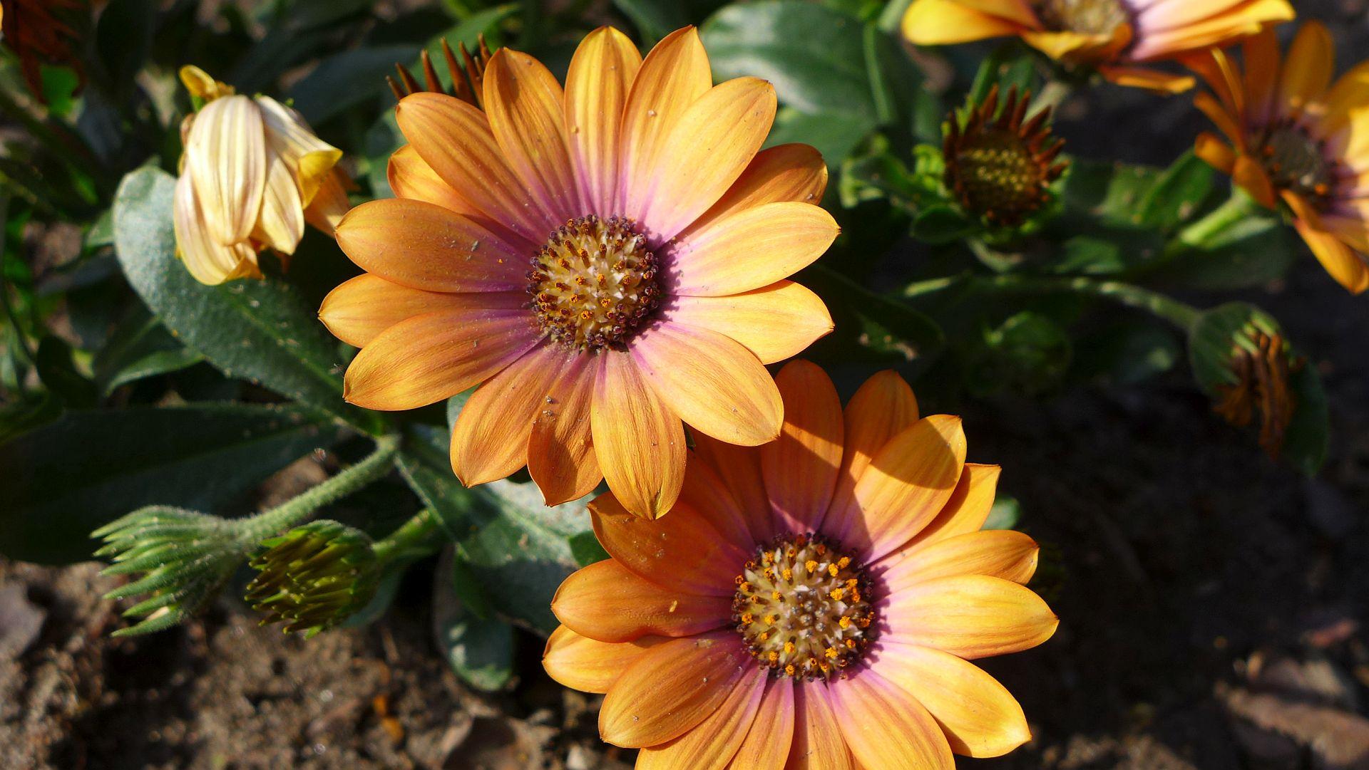 11_Blühender Frühling