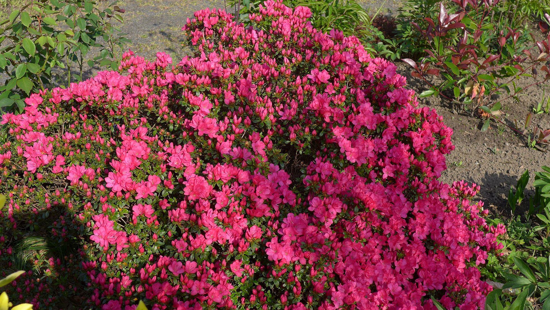 12_Blühender Frühling